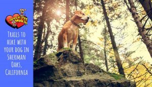 Trails to hike with your dog in Sherman Oaks, California