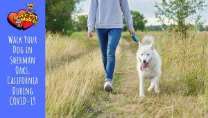Walk Your Dog in Sherman Oaks, California During COVID-19